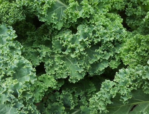 A Massage for My Kale